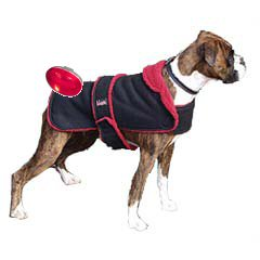 Dog in Coat with Light.jpg